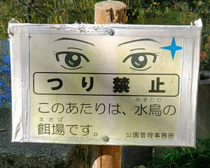 Eyes2_300x240.jpg