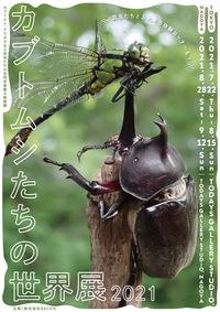 P6_c_Kabuto.jpg